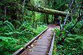 Fall Creek Falls Trail (Douglas County, Oregon scenic images) (douDA0211a).jpg