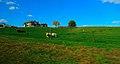 Farm on Koch Road - panoramio.jpg