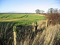 Farmland near Berrington Lodge - geograph.org.uk - 285732.jpg