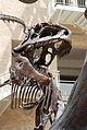 Fernbank Museum - Atlanta - Flickr - hyku (18).jpg