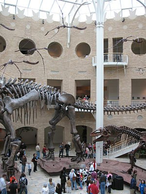Fernbank Museum of Natural History - Inside Fernbank