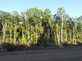 Ferreira Gomes - State of Amapá, Brazil - panoramio (6).jpg