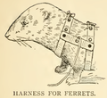 Ferret harness.png