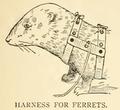 Ferret harness.png