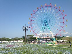 Ferris wheel and nemophila in Umino Nakamichi Seaside Park.JPG