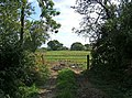 Field, Starts Green Farm - geograph.org.uk - 1491074.jpg