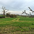 Field - panoramio (44).jpg