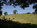 Field near Pulworthy - geograph.org.uk - 537067.jpg