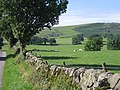 Fields and sheep - geograph.org.uk - 925648.jpg