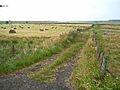 Fields near Hadrian's Wall - geograph.org.uk - 207971.jpg