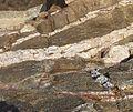 Filon dans la roche.jpg