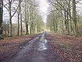 First Broad Drive, Grovely Woods - geograph.org.uk - 350605.jpg
