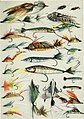 Fisherman's lures and game-fish food - with colored pictures from life of various creatures fish eat and new improved artificial imitation floating nature lures and chart-plans to show the haunts (14579312488).jpg