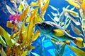 Fishes and plants (33593169831).jpg