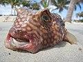 Fishface - Flickr - danbri.jpg