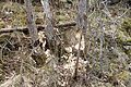 Flekkeroy south IMG 3436 beaver.JPG