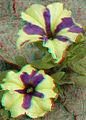 Flickr - jimf0390 - JimF 06-05-12 0012a flowers at Latham.jpg