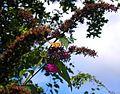 Flickr - ronsaunders47 - Butterfly Beauty 3..jpg