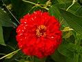 Flor en Galiza.jpg
