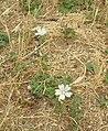 Flora della Riserva Naturale Valle dell'Aniene 6.JPG