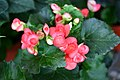Flora of Thailand (4).jpg