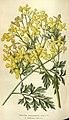 Flore des serres et des jardins de l'Europe (8594768625).jpg