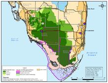 Florida Panther Wikipedia