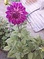 Flower20180527 184444.jpg