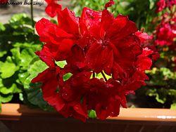 FlowerInGarden.jpg