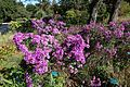 Flowers @ Parc Floral @ Paris (30042849862).jpg
