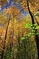 Foliage Walk (9) (30234200172).jpg