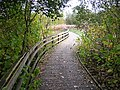Footpath Near Calder Water - geograph.org.uk - 270039.jpg