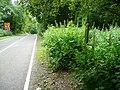 Footpath off the B4115 - geograph.org.uk - 870621.jpg
