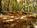 Forest-trail-north-fork - West Virginia - ForestWander.jpg