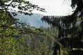 Forest Elbsandsteingebirge -2.jpg