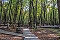 Forest in Azerbaijan.jpg