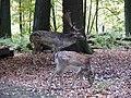 Forest in Dortmund - panoramio.jpg