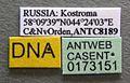 Formica aquilonia casent0173151 label 1.jpg