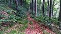 Forstweg durch die Heinsener Klippen.jpg