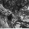 Fotothek df ps 0002135 Bäume ^ Landschaften ^ Insellandschaften.jpg