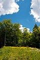 From the Tree House - panoramio.jpg
