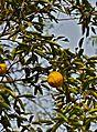 Fruit (6399154593).jpg