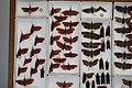 Fulgoridae Drawers - 5036720618.jpg