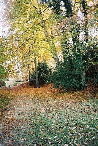 Bisham Woods - Fultness Wood, part of the ancient beechwood at Bisham Woods