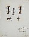 Fungi agaricus seriesI 032.jpg