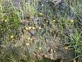 Fungi sp. (5103055195).jpg