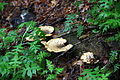 Fungis-spring-forest - West Virginia - ForestWander.jpg