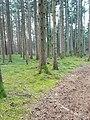 Göfis-forest near Gasserplatz-03ASD.jpg