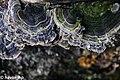 Gabala State Nature Sanctuary colorful mushrooms.jpg
