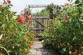 Garten Juli 2014 (15303152678).jpg